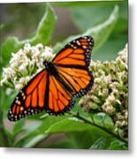 Once Upon A Butterfly 001 Metal Print