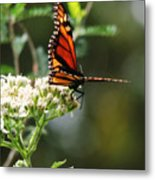 Once Upon A Butterfly 006 Metal Print