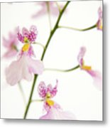Oncidium Orchid Flowers Metal Print