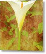 One Arum Lily Metal Print