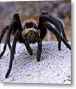 One Big Hairy Spider Metal Print