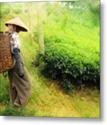 One Day In Tea Plantation  Metal Print