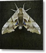 One Eyed Sphinx Moth Metal Print