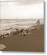 One Flap Of A Seagull Metal Print