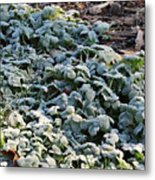 One Frosty Morning Metal Print