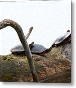 One Hiding Turtle Metal Print