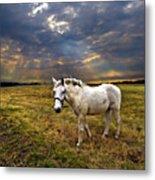 One Horse Metal Print