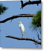 One Leg Perch - Debbie May Metal Print