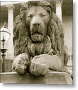 One Of Four Lion Statues Outside St George's Hall Liverpool Metal Print