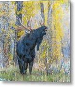 One Proud Bull Moose Metal Print