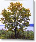 One Tree Hudson River View Metal Print