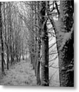 One Tree In Front Metal Print