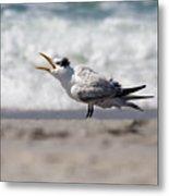 One Upset Royal Tern Metal Print