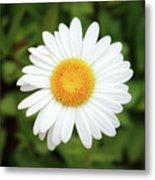 One White Daisy Metal Print