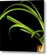 Onion Greens Metal Print