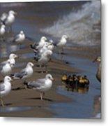 Ducklings In Trouble - Oops Not Into Diversity Metal Print