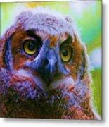 Opalescent Owl Metal Print