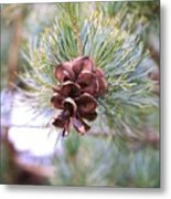 Open Pine Cone Metal Print