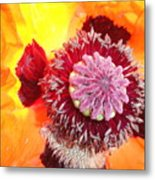 Open Poppy Metal Print