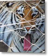 Open Wide Say Ahhhh Metal Print