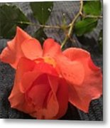 Opened Rose  Metal Print