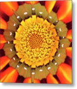 Orange African Daisy Metal Print