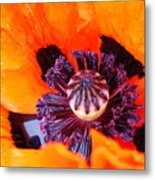 Orange After The Rain Metal Print