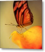 Orange And Black Butterfly Sitting On The Yellow Petal Metal Print