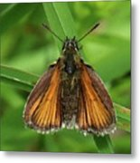Orange And Brown Moth Metal Print