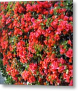Orange And Colral-pink Flowers 2 Metal Print