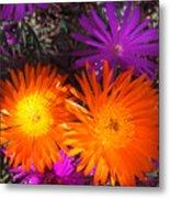 Orange And Fuchsia Color Flowers Metal Print