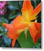 Orange And Yellow Canna Lily 2  Metal Print