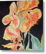 Orange And Yellow Canna Lily On Black Metal Print