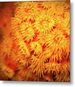 Orange Anemones Metal Print
