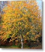 Orange Autumn Tree Metal Print