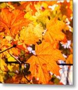 Fall Of Orange Leaves Metal Print
