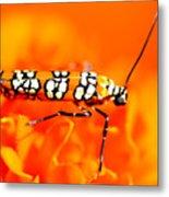 Orange Beetle On Orange Flower Metal Print