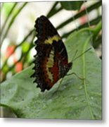 Orange Black Butterfly Metal Print