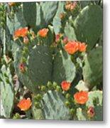 Orange Blossom Cactus  Metal Print