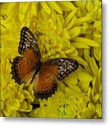Orange Butterfly On Yellow Mums Metal Print
