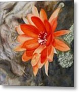 Orange Cactus Flower II Metal Print