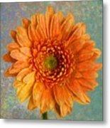 Orange Color Stroke Gerber Daisy Metal Print