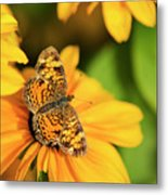 Orange Crescent Butterfly Metal Print