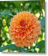 Orange Dahlia Master Gardeners Art Collection Baslee Troutman Metal Print