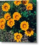 Orange Daisies--film Image Metal Print