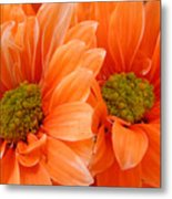 Orange Daisies Paired Metal Print