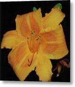 Orange Daylily Flower Blossom In A Garden Metal Print