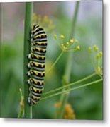 Orange Dot Caterpillar Metal Print