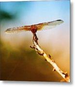 Orange Dragonfly Wings I Metal Print
