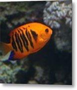 Orange Fish Metal Print